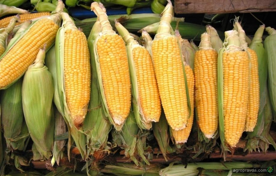 Падение рынков сои и пшеницы уменьшает вероятность восстановления цен в Украине